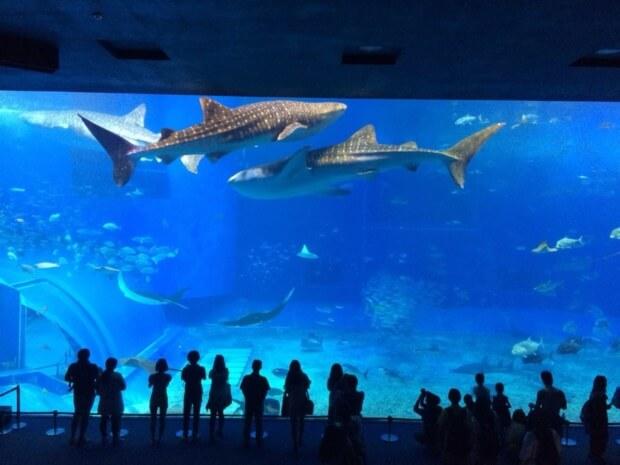 梅雨の沖縄は美ら海水族館がおすすめ