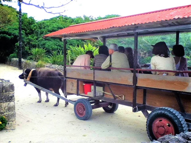 沖縄移住生活のデメリット