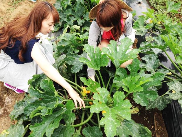 沖縄で農業の住み込みバイト