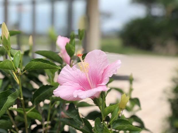 沖縄の移住者が多い地域