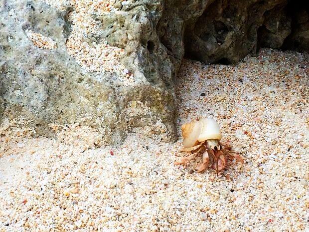 憧れの沖縄生活!移住する前に知りたい生活の特徴